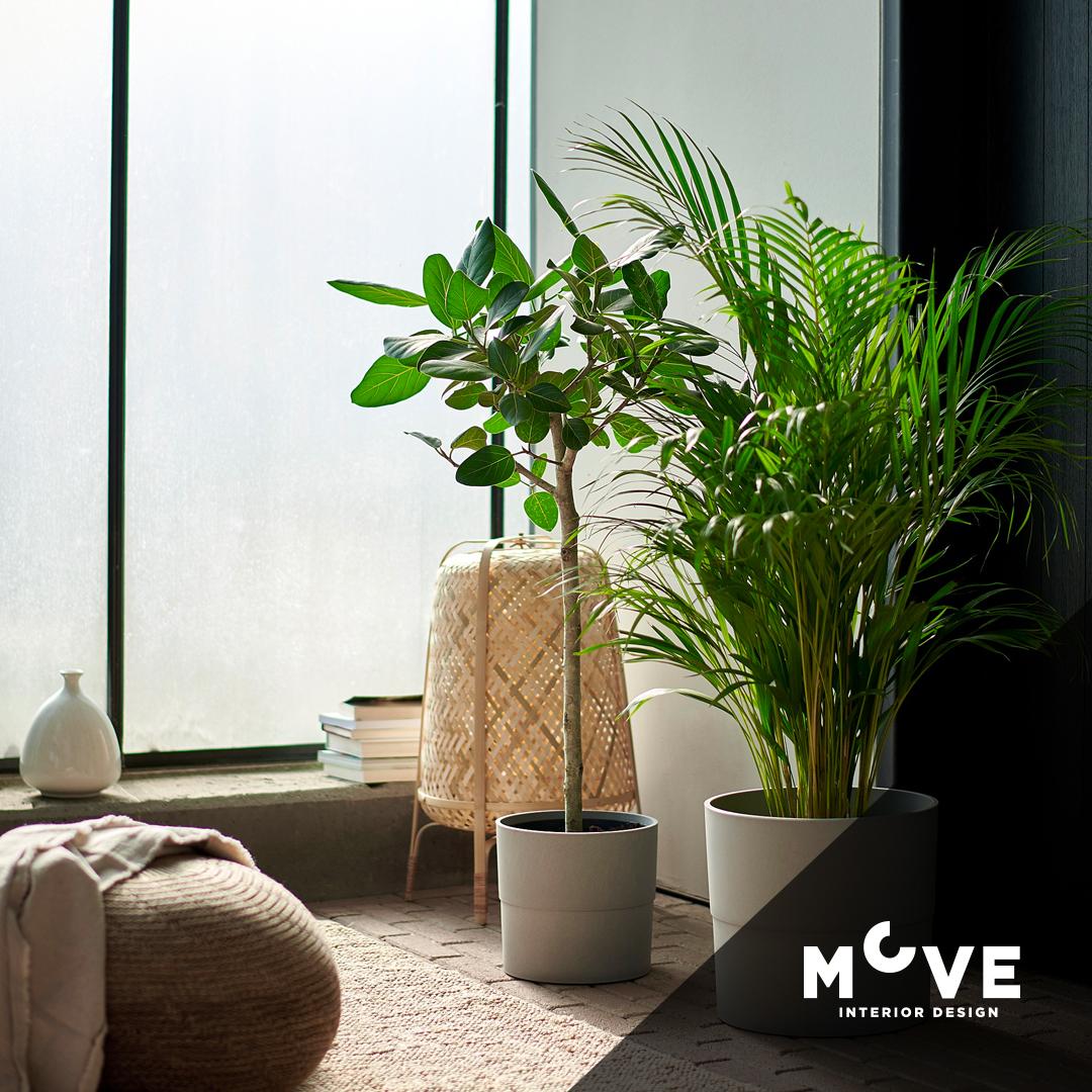 İç Mekân Bitkileri ve Dekoratif Saksılar